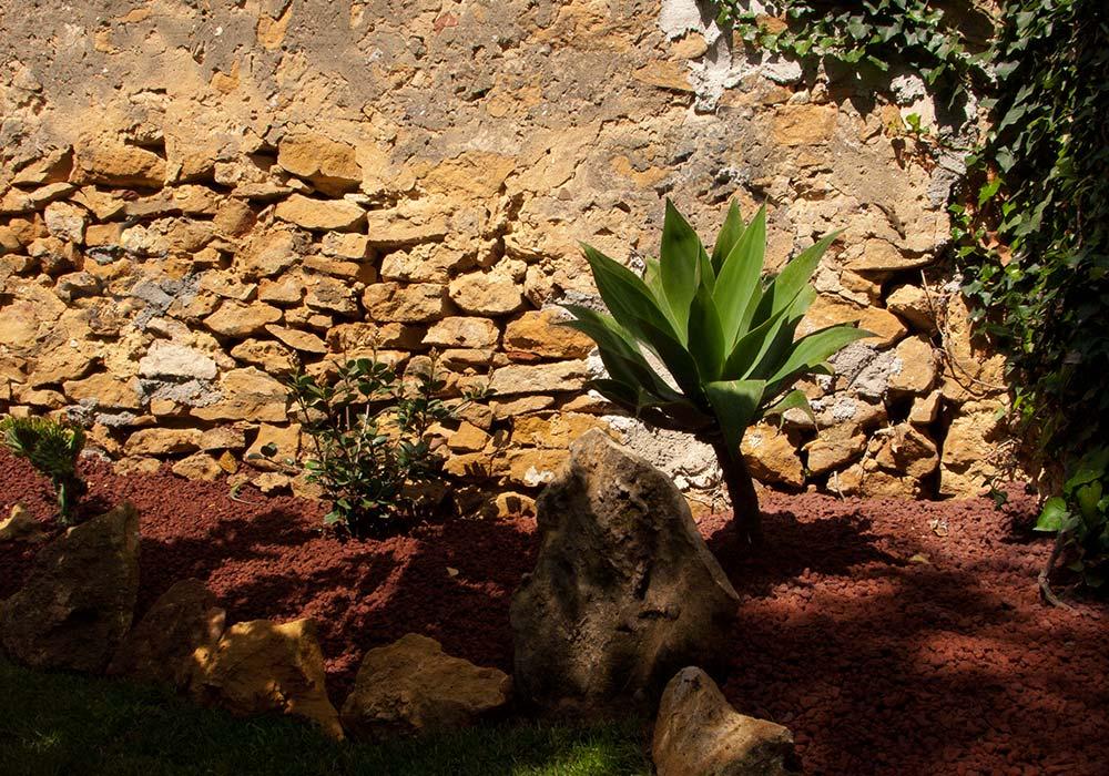 A rosa del deserto in the rock garden of Casita DeLuca